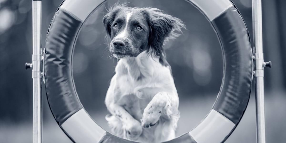 Foto hond behendigheid .jpg