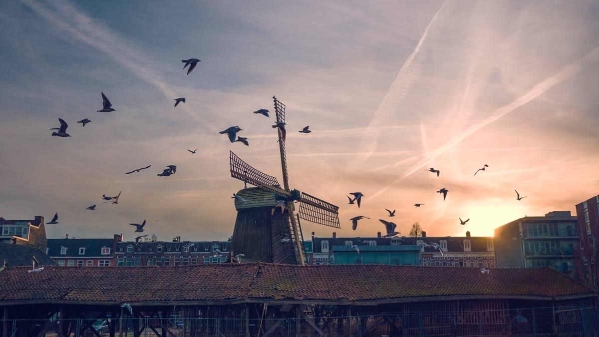 Eindhoven.jpg