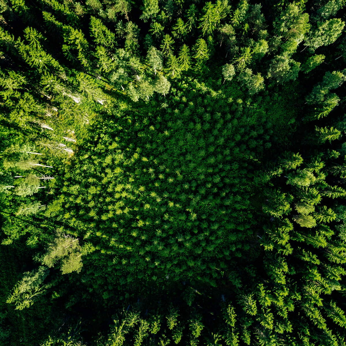 aerial-top-view-of-green-trees-in-the-forest-L4GVCQK@1x.jpg