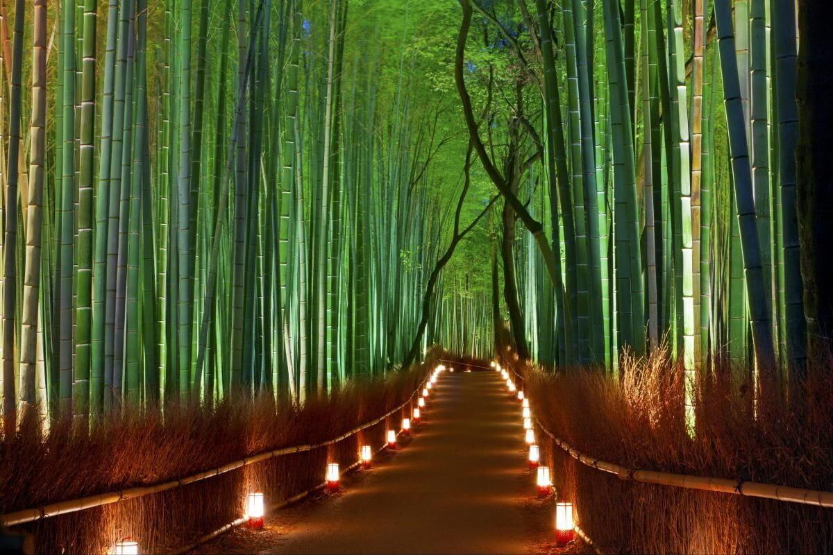 bamboo japan.jpg