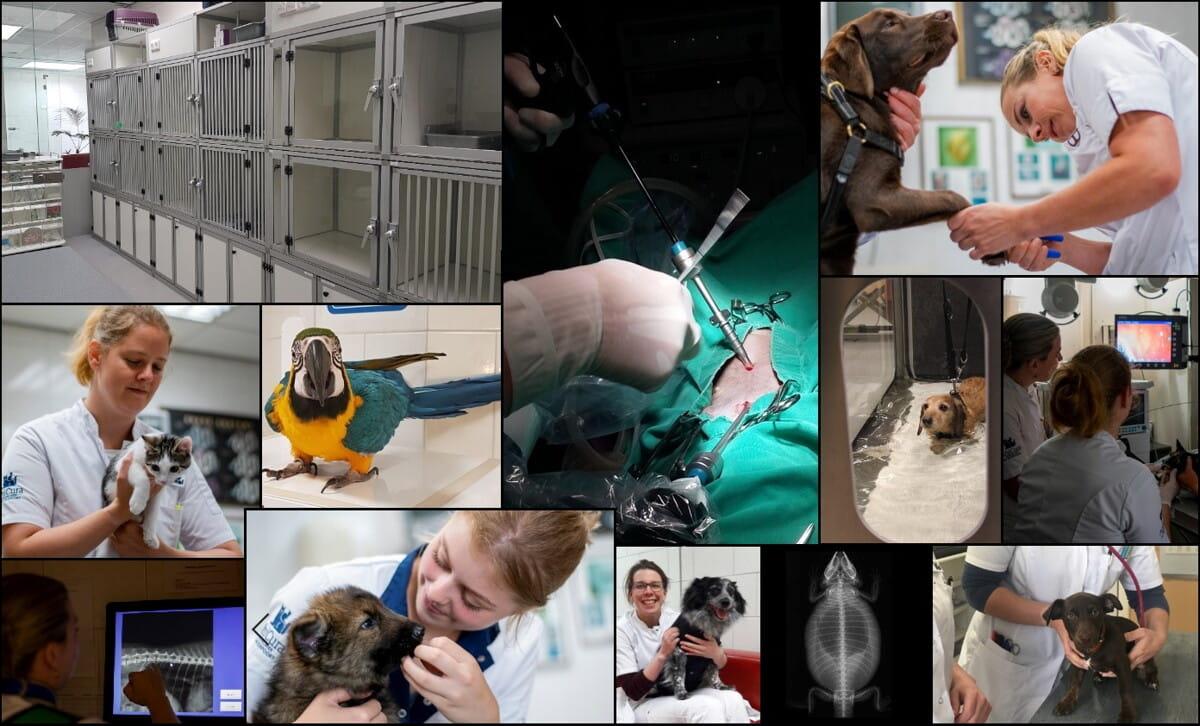 Afbeelding collage vacature dierenarts Waterpoort Sneek.jpg