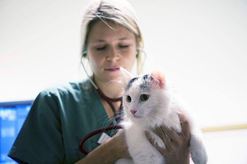 Internship Specialistico in Anestesia image