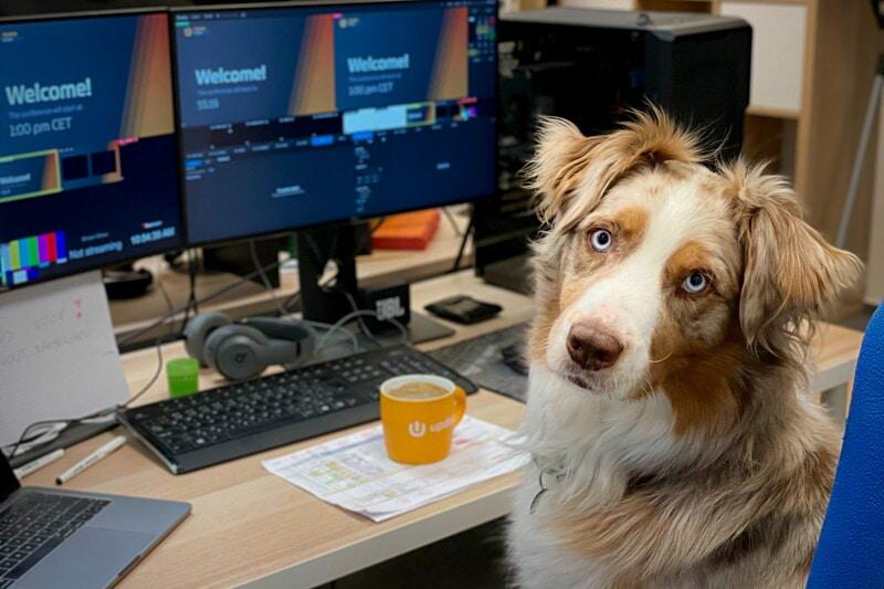 Lead développeur Javascript Natif - Bien être animal - Site à très fort trafic image