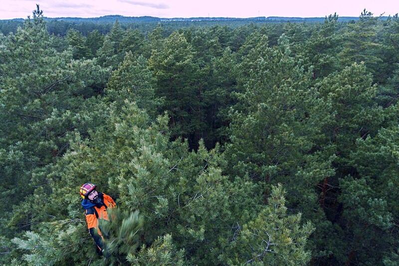 Arborister sökes till hela Mälardalen image