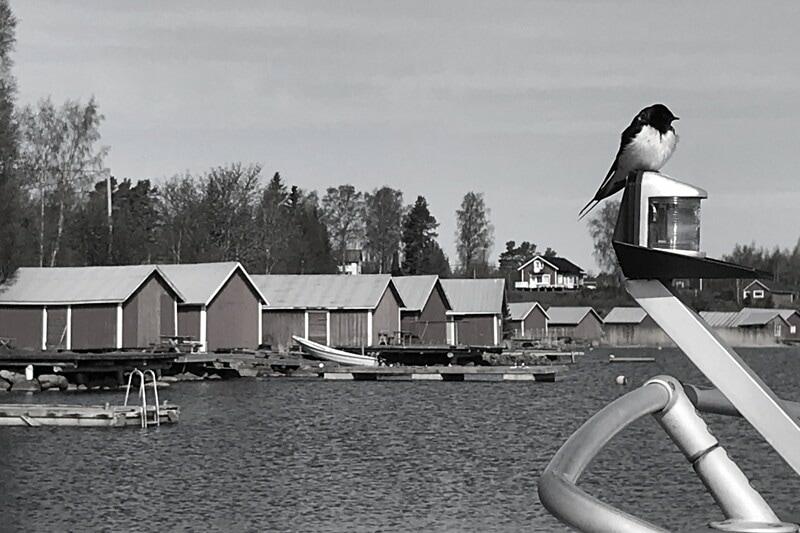 Taloushallinnon asiantuntija Vaasaan image