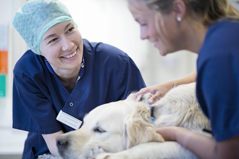 Vétérinaire activité référée Chirurgie H/F - Région lyonnaise image