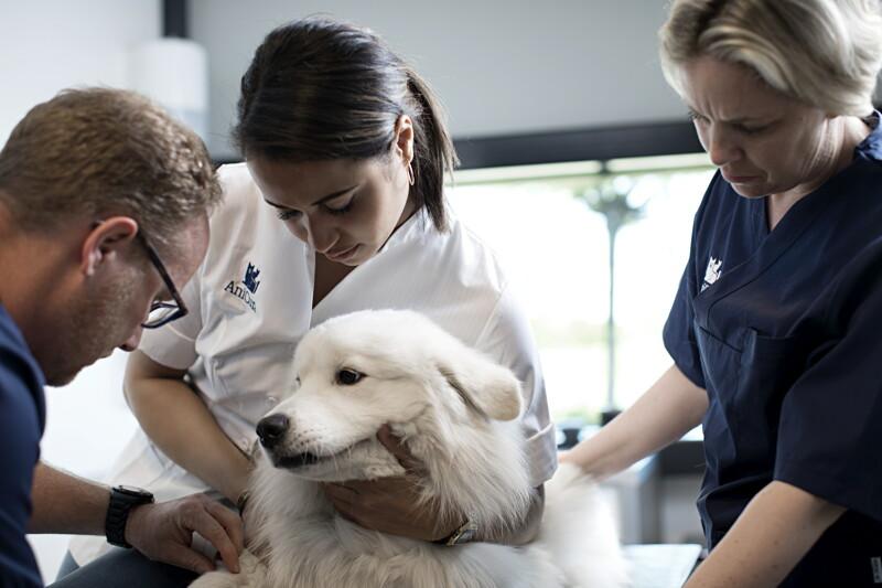 Vétérinaire avec gardes H/F - Nancy image